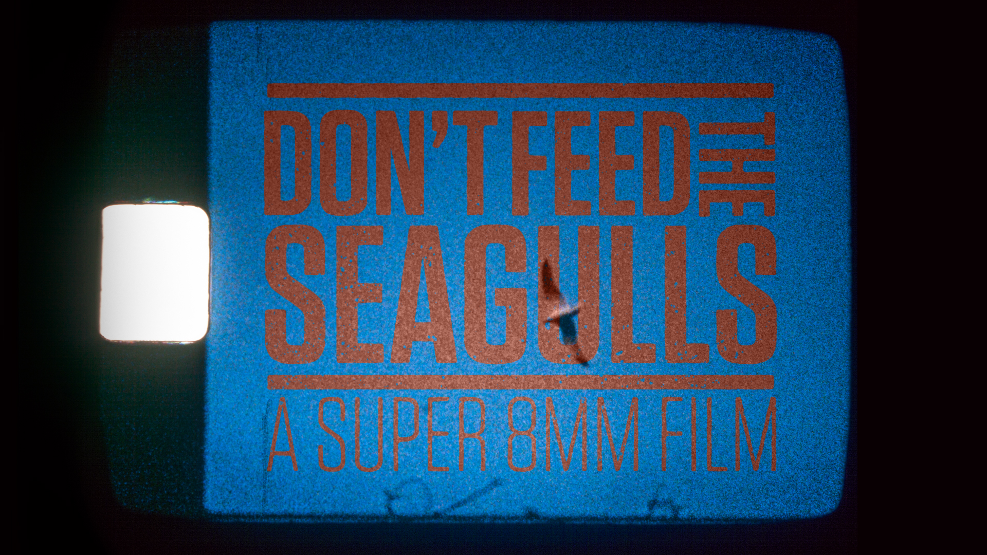 dont feed the seagulls super 8mm film