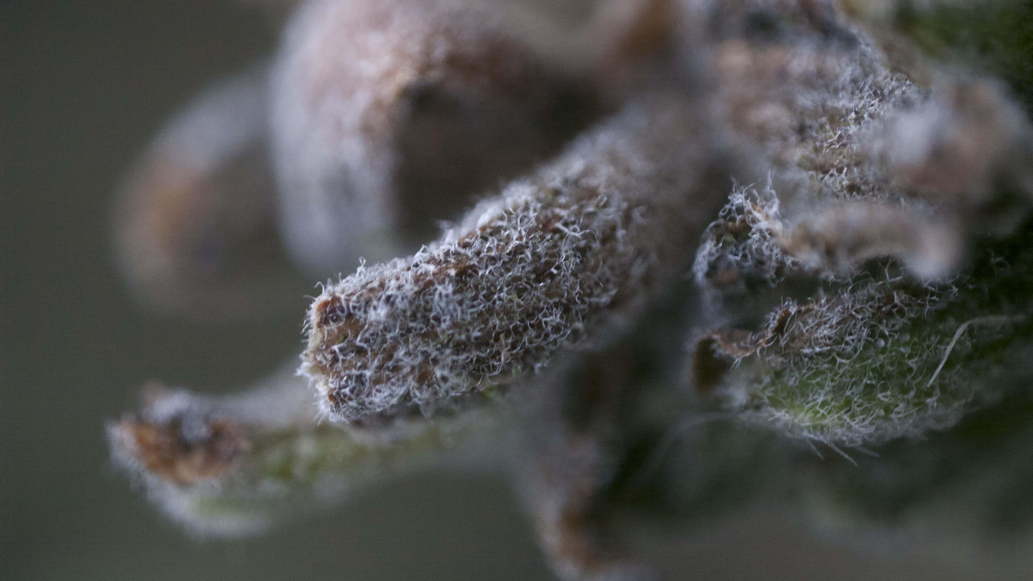 Macro Phtogography. Frozen Plants. Wales, UK.